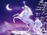 unicorn white horse2